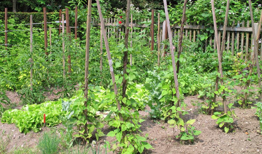 Fare l orto perch piace mondo for Piantare pomodori