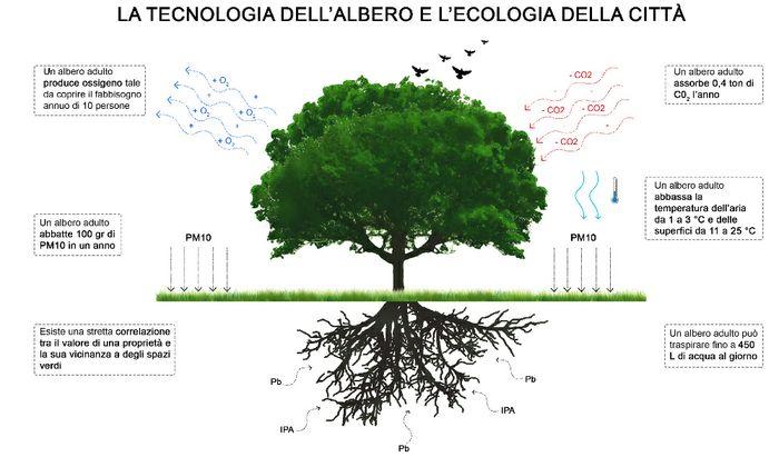 La tecnologia dell'albero e l'ecologia della città